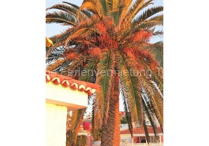 Teneriffa - Ruhiges Ferienhaus mit Meerblick und Teideblick in Mesa del Mar - 015
