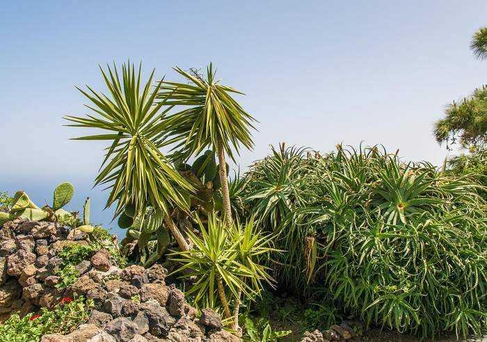 Landestypische Finca mit Whirlpool, Garten und Patio im grünen Norden