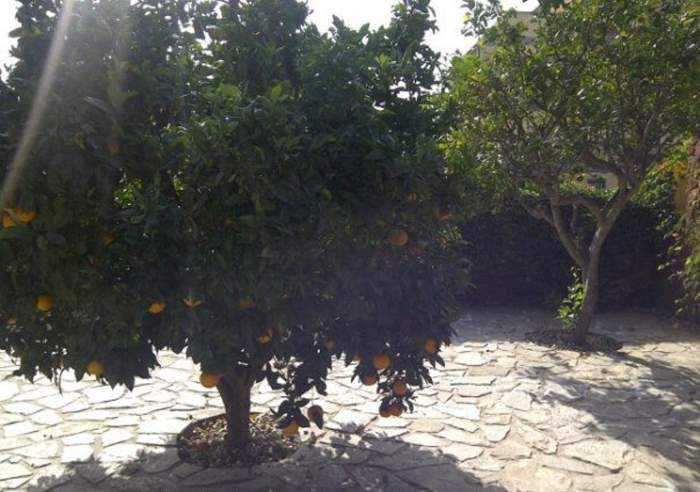 Ferienhaus auf Gartengrundstück mit Pool, Weinkeller u. Kamin in Arona
