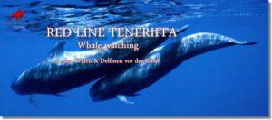 Besuchen sie mit uns die Wale und Delfine vor der Küste Teneriffas.